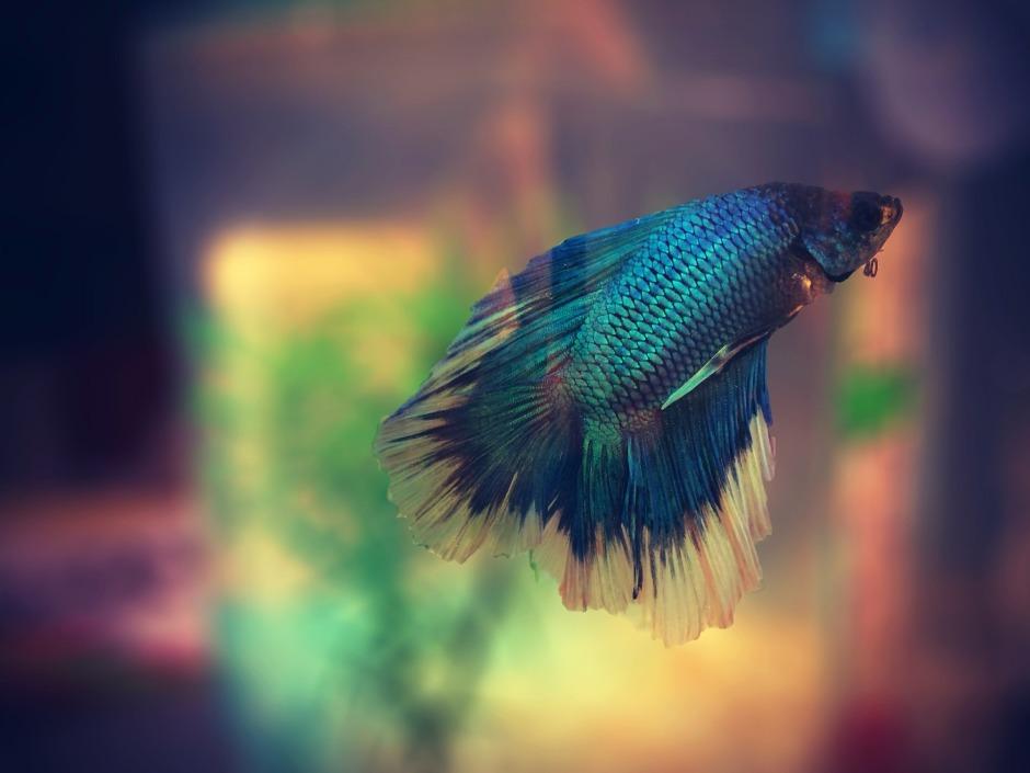 fish-622993_1920